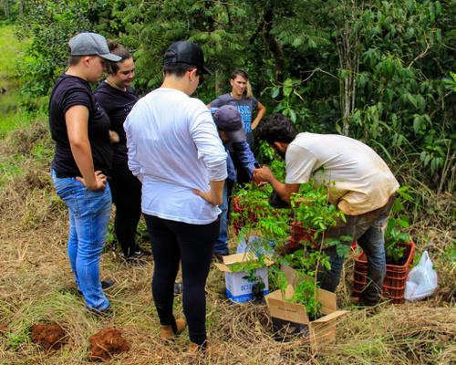 Cervejaria Octopus plantou 150 mudas de árvores