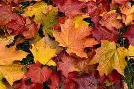 As folhas secas de coloração avermelhada marcam o Outono