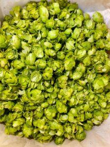 As flores frescas do lúpulo foram usadas na produção de uma Pale Ale